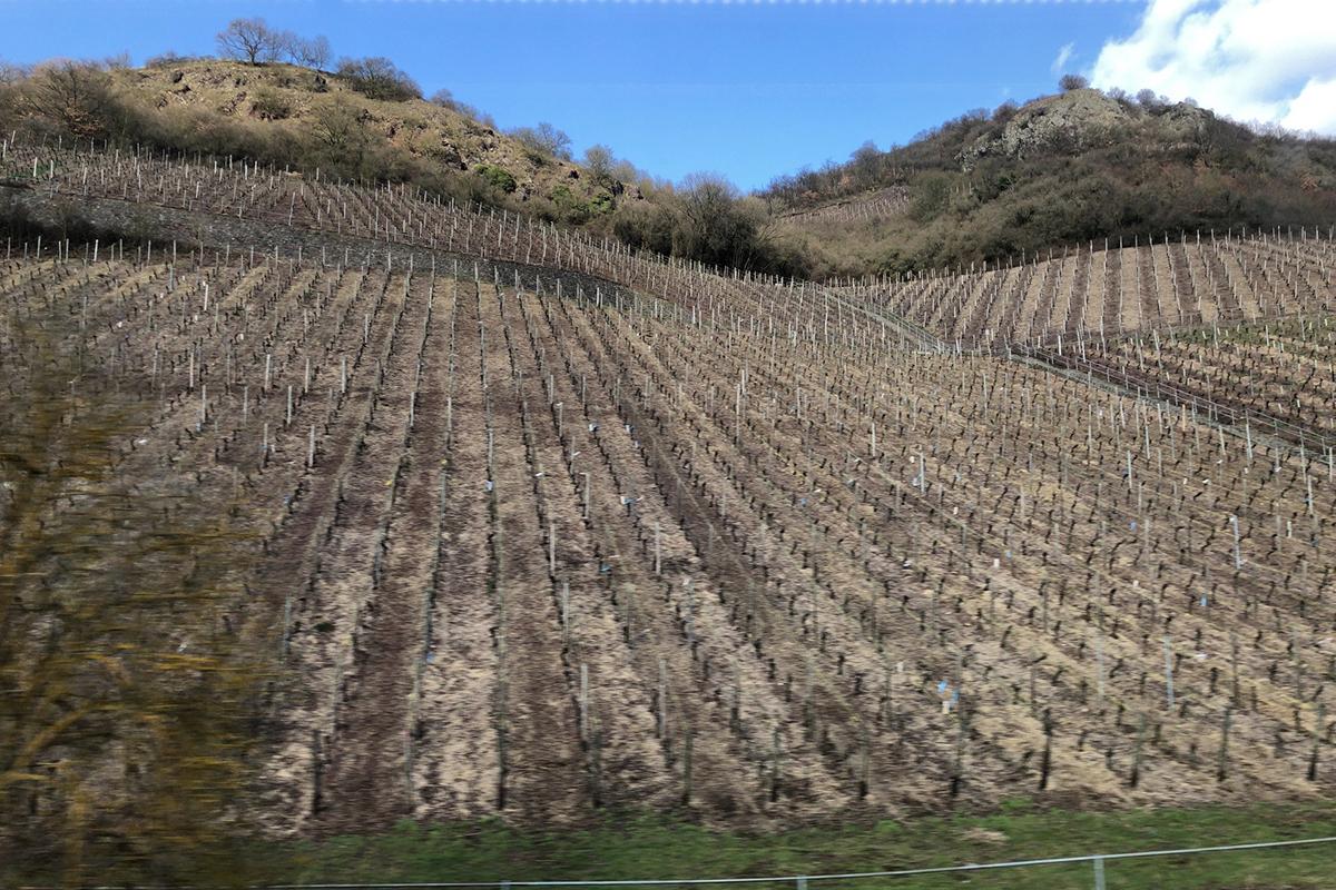 ドイツワイン畑